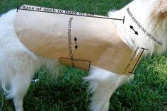 patron-manteau-chien