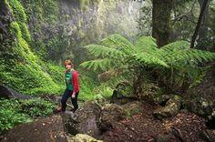 Weeping Rock, New England National Park. Near Armidale. England Australia, England National, Travel Ideas, New England, National Parks, Environment, Autumn, Rock, Nature