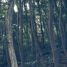 """【horizonblue_photo】さんのInstagramをピンしています。 《* """"立木"""" *  最近、乃木坂46メンバーのソロ写真集が次々に出版されてますね~✨. って、普通んなコト知りませんわな(笑)  個人的に楽しみなのは、1推しの秋元真夏サンと桜井玲香サンの写真集❗. . 乃木坂ちゃんの写真集って、品があって綺麗なのでポトレの参考にもなる🎵. . もうこの際、出版済みの全メンバー買うたろか・・・(笑)  #秋元真夏サンが1推しでございます #ドルオタではございません #坂道シリーズ以外は興味ありません #乃木坂46と欅坂46の両方が好きです  #igersjp #icu_japan #photooftheday #instagood #写真撮ってる人と繋がりたい #写真好きな人と繋がりたい #林 #立木 #forest #wood #森 #木 #icu_nature #great_captures_nature #igpowerclub #風景 #自然 #nature #art_of_japan_ #webstagram #picoftheday》"""