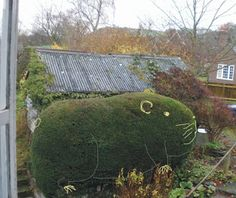 Guinea pig Hedge - Not sure how they made the hip, feet, whiskers, eye, ear, but it works from a distance. Pretty creative!