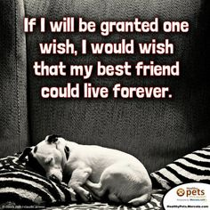 """""""If I will be granted one wish, I would wish that my best friend could live forever."""" i know it's selfish but i wish for this all the time. I Love Dogs, Puppy Love, Cute Dogs, Dog Quotes, Animal Quotes, Dog Sayings, Yorkshire Terrier, Boston Terrier, Shih Tzu"""