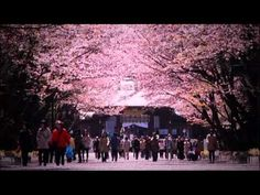 CINEMATIC CITY SAPPORO - YouTube