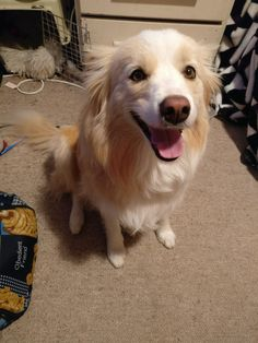 She just wants pats https://ift.tt/2qMeWWK #Puppy #Puppies #Pics #Dog #Adopt #Pets #Animals