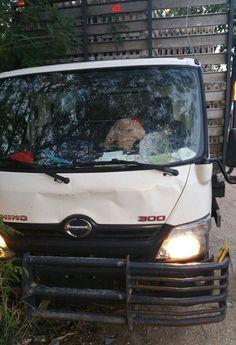 Resultado de imagen para Vuelco de camión cargado de pollos en avenida jacobo majluta
