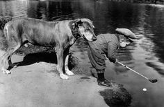 Helpful Dog, 1920s  A dog holds onto a little boy by the tail of his golfing jacket as he tries to retrieve a ball in a river with his golf ...