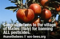 "Congratulations to the village of Malles, Italy for Banning All Pesticides - ""An apple a day keeps the pesticides away #savethebees #savethehumans"" : Greenpeace - 12 September, 2014"