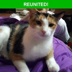 Great news! Happy to report that Josette has been reunited and is now home safe and sound! :)