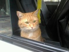 Twitter / StreetCatBob: Waiting by blue cross van for ...
