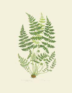Fern Botanical Print Collection | Scribd