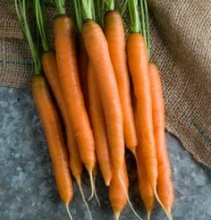 """Mokum Carrots are slender """"pencil carrots"""". Along with Nelson, top-rated for flavor among the early varieties. Attractive, slender roots are great for early bunches."""