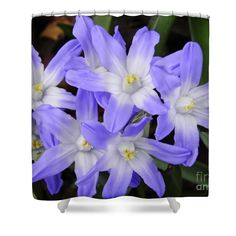 "Spring in Purple Shower Curtain   $65 at http://fineartamerica.com/products/spring-in-purple-sarah-loft-shower-curtain.html  This shower curtain is made from 100% polyester fabric and includes 12 holes at the top of the curtain for simple hanging. The total dimensions of the shower curtain are 71"" wide x 74"" tall."