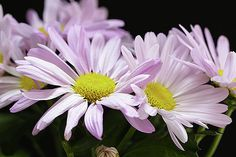 A bouquet of white chrysanthemums by George Westermak#George Westermak#flowers#FineArtPrints#homedecor