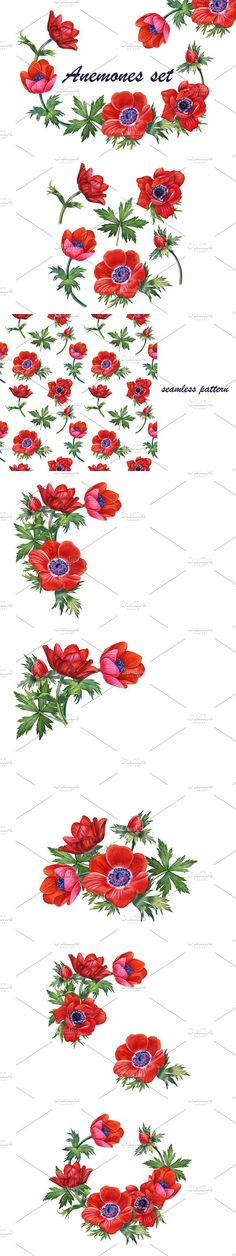 Anemones set. Watercolor Flowers