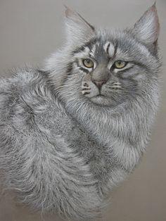 chat maine coon ...pastel sur papier canson www.georges-rossi.com
