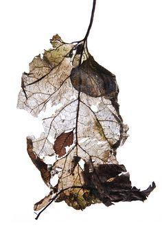 . Botanical Art, Botanical Illustration, Decay Art, Growth And Decay, Organic Art, A Level Art, Kintsugi, Arte Floral, Natural Forms