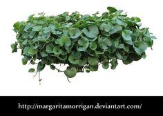 plant by Margaritamorrigan on deviantART