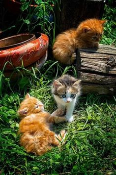 Video Cute Cats and Kittens Doing Funny Things - Funny Cat compilation Baby Orange Kittens, Orange Cats, Cute Cats And Kittens, Kittens Cutest, I Love Cats, Fluffy Kittens, Kittens Playing, Pretty Cats, Beautiful Cats