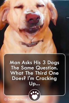 dog hacks,dog tips,dog learning,dog care,dog stuff Cute Animal Videos, Funny Animal Pictures, Dog Pictures, Animal Pics, Cute Funny Animals, Funny Dogs, Cute Dogs, Awesome Dogs, Big Dogs