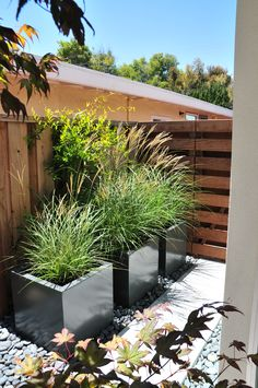 Tall grasses used in hardscape/large planters (non-succulent)