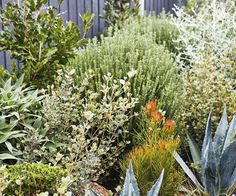 Sorting out a multi-level garden with beds sporting vibrant, low-growing plants has made this coastal patch in Torquay a standout. Coastal Gardens, Beach Gardens, Small Gardens, Modern Gardens, Tropical Gardens, Cottage Gardens, Home Garden Design, Backyard Garden Design, Garden Landscape Design