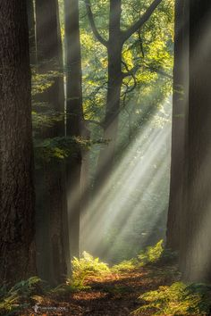 The Beam to Be - Click to see on black and let it shine on you  Once more: All…