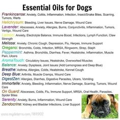 essential oils for Dogs: