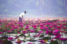 Beautiful Bangladesh ©: Water Lilies bloom in the Sundarbans ( Biswas) Beautiful Places To Travel, Beautiful World, Bangladesh Travel, Nature Photography, Travel Photography, Backpacking India, Village Photos, Mangrove Forest, Bhutan