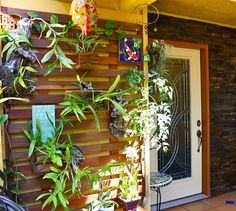 Vertical Orchid wall using ipe wood and homemade planters. Now, if they could all bloom at the same time!