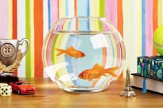 View top-quality stock photos of A Goldfish In A Fishbowl On A Table With Various Knick Knacks. Find premium, high-resolution stock photography at Getty Images. Unique Fish Tanks, Cool Fish Tanks, Tropical Fish Tanks, Diy Aquarium, Aquarium Design, Fish Bowl Decorations, Betta Fish Toys, Aquariums For Sale, Fish Tank Design