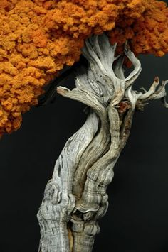 Looks like a golden blooming tree.but it is driftwood Weird Trees, Unique Trees, Tree Forest, Tree Leaves, Driftwood Art, Tree Art, Tree Of Life, Nature Pictures, Amazing Nature