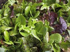 top 6 most cost-effective veggies to grow
