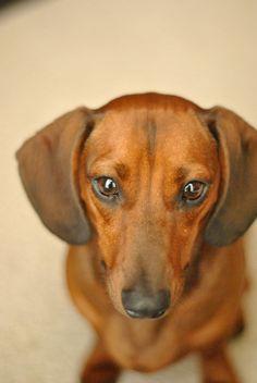 My precious dachshund, Molly.