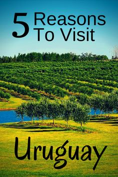 Here are 5 Reasons to visit Uruguay. Don't miss Uruguay off your South America list.   #backpackinguruguay #traveluruguay