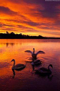 Sun rise on Swan Lake, Castle Loch, Lochmaben near Dumfries Scotland. Photo by...Brian Kerr Photography.