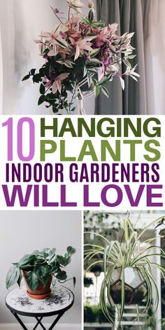 Indoor gardening enthusiasts are going NUTS over these beautiful hanging plants! Inside Plants, Ivy Plants, Fake Plants, Hanging Plants, Garden Plants, Diy Hanging, Faux Outdoor Plants, Indoor Plants, Indoor Gardening