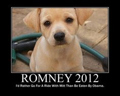 Romney put his dog on top of his car. Obama put his dog on top of a bed of rice.