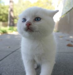 cute white kitten exploring world