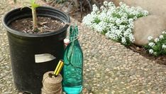 Self-Watering Device - Don't worry about whether or not your plants are or aren't getting enough water. Instead, build (or buy) a self-watering device that does all the work for you! It's pretty simple and cuts out a lot of effort, Growing Melons, Growing Herbs, Sprinkler, Container Gardening, Gardening Tips, Pineapple Planting, Types Of Herbs, Self Watering Planter, Herb Seeds
