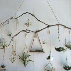 Love this air-plant display