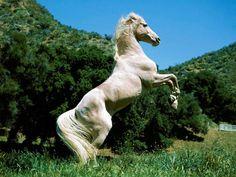 Tapeta na plochu kůň