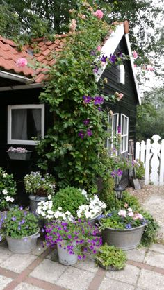 She Sheds, Allotment, Cubbies, Cottage, Garden, Plants, Cubicles, Garten, Cottages