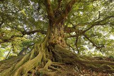 関東平野の名峰・茨城県「筑波山」山中の巨木を巡るハイキング | 茨城県 | Travel.jp[たびねす]