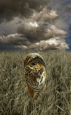 •♥• 3321 by peter holme iii on 500px