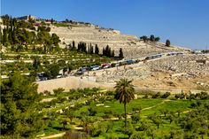 #sponsoredpost This 12 day tour package focuses on Biblical sites and Christian landmarks. Visit Nazareth Jesus' hometown; the Galilee and see the River Jordan where Jesus was baptized. Retrace Jesus' footsteps through Jerusalem, walk the Via Dolorosa and visit the Holy Sepulchre. Also visit iconic landmarks like the Dead Sea and Masada. This tour includes a trip to the UNESCO-listed Petra in Jordan, one of the Seven Wonders of the World. #ad #affiliatelink #travel #traveldesitnations… Petra Tours, Seven Wonders, Dead Sea, 12 Days, Day Tours, Jerusalem, Wonders Of The World, Israel, Paris Skyline
