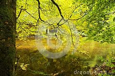 River banks through forest on sunny fall day.