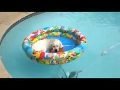 Lab in a floatie