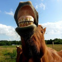 Paardengebit | Afwijkingen en Wie doet de Behandeling?  Blog aangeboden door Top Horse Outlet