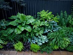 Shade garden - lush - great green colour story - cool blue greens to warm lime greens
