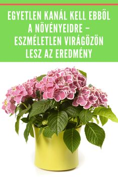 Ráadásul a konyhádban mindent megtalálsz hozzá. #növény #kanál #virágzik Indoor Flowering Plants, Weekend House, Pretty Flowers, Vegetable Garden, Organic Gardening, Planting Flowers, Fall Decor, Decoupage, Diy And Crafts