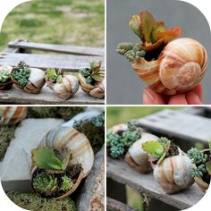 DIY Planters Ideas ** You can get additional details at the image link…